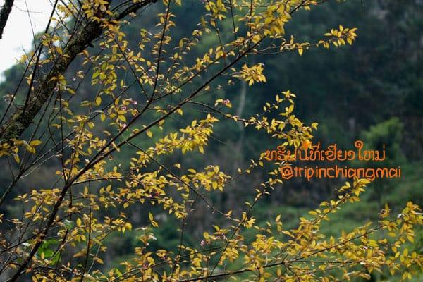 doilhong-chiangdoa-09