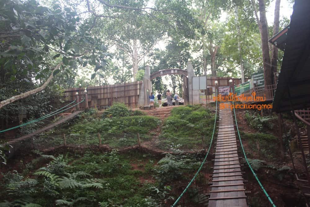 กาแฟต้นไม้ The Giant Chiangmai