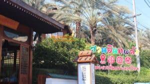 โกหลักสวนอินทผลัมแห่งแรกในประเทศไทย