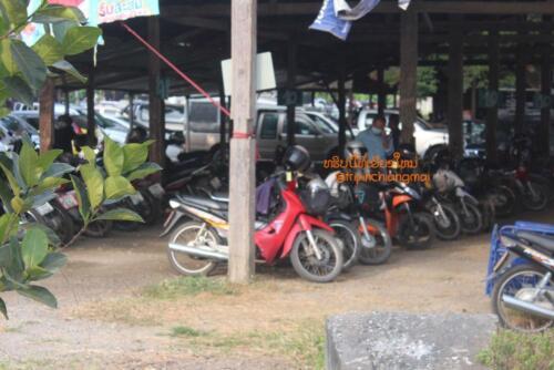 market-cow-sanpatong-05