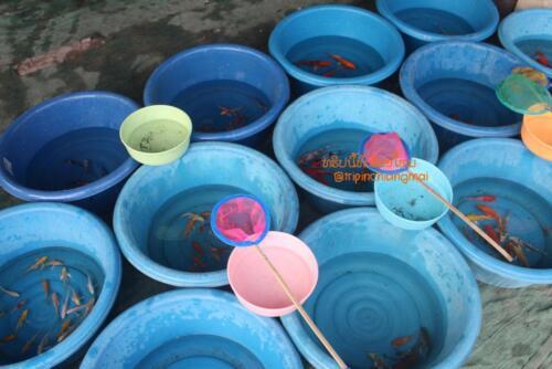 market-cow-sanpatong-10