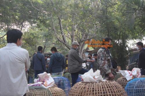 market-cow-sanpatong-24